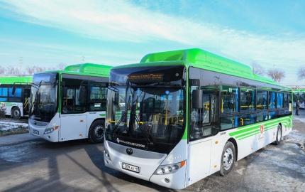 Жаңа бағытқа   жаңа автобустар шықты